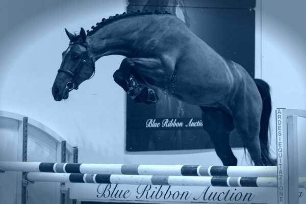 BLUE RIBBON AUCTION first collection has been revealed